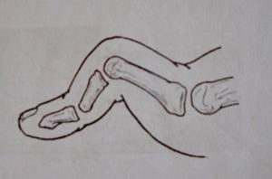 Hình 5